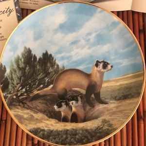 The Black Footed Ferret by Will Nelson 1990